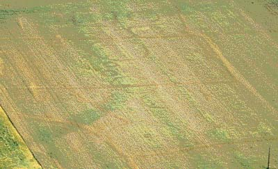 Cropmarks